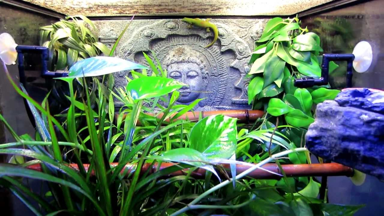 My Gold Dust Day Gecko In Exo Terra Terrarium 18x18x24 Sri Habitat