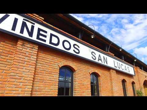 Viñedos San Lucas l Vendimia 2017 l MX Travel Guide