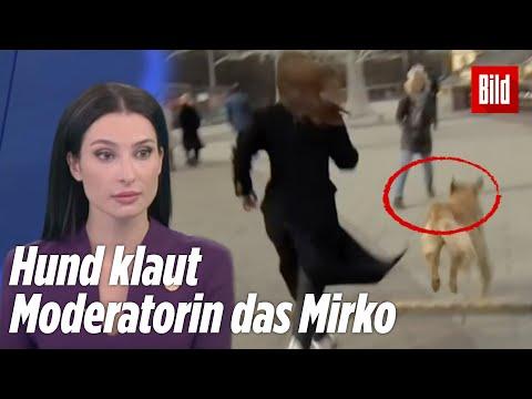 Hund klaut Moderatorin