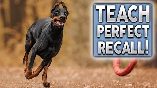 How To Teach PERFECT Recall! Stop Your Dog Ignoring You Off Leash!