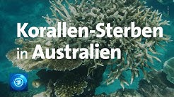 Great Barrier Reef: Korallen-Sterben in Australien