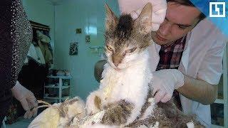 Живодеры залили кошку монтажной пеной