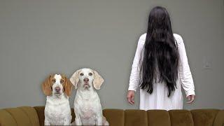 Dogs vs 'The Ring' Girl Prank: Funny Dogs Maymo & Potpie Play Games with Samara Morgan