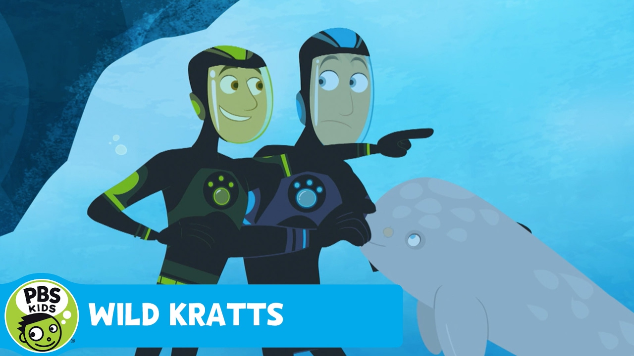 WILD KRATTS | Baby Narwhal! | PBS KIDS - YouTube
