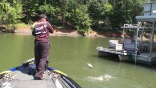 Pesca Black Bass Fishing Lake Wylie