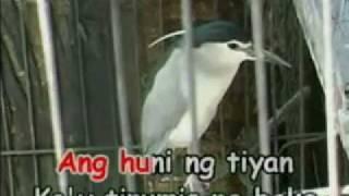 Tiririt ng Maya (Tagalog Nursery Rhyme)