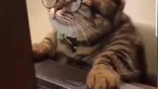 Kedi Bey piyasaya yargı dağıtıyor