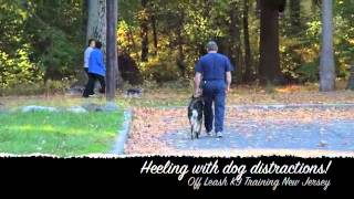 Shepherd Before And After Heeling Off Leash K9 Training New Jersey