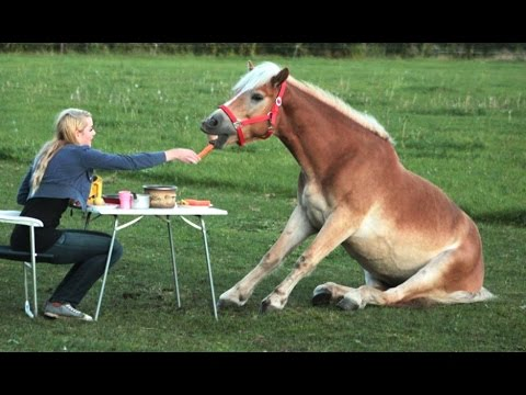 Funny Horse s  Try Not To Laugh BEST OF