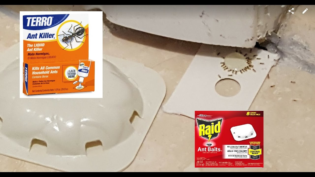 What S The Best Ant Killer Terro Vs Raid And Liquid Vs Baits Traps Youtube