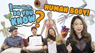 How Much Do You Know - Human Body thumbnail
