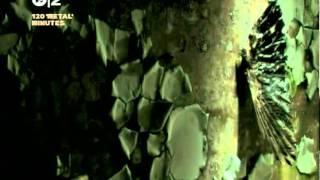 Mortiis - Decadent and desperate (2005, 480p)