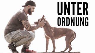 Unterordnung - Training mit American Pitbull Terrier Amalia