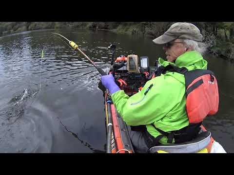 Siuslaw Kayak Salmon Fishing: 9/28/19 King