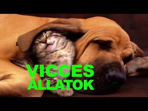 VICCES ÁLLATOK - próbálj meg nem mosolyogni - Vicces Kutya Videók - Összeállítása 2018