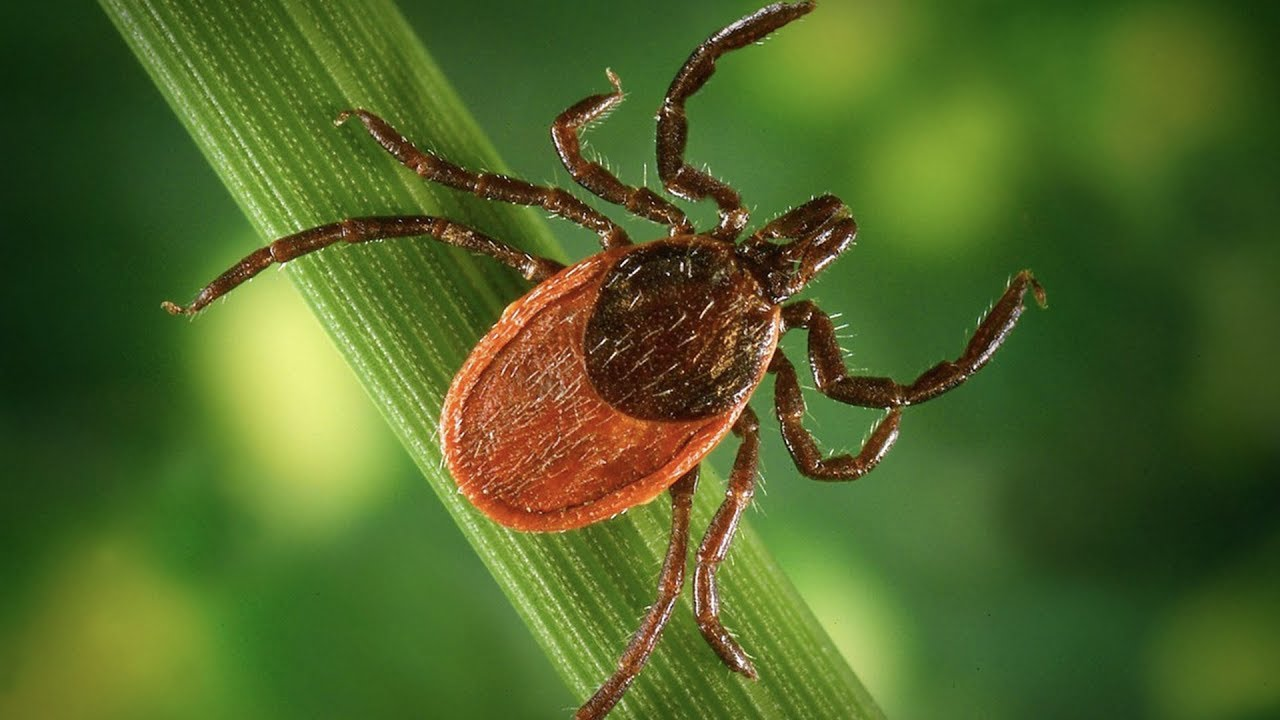 Hacking Chronic Lyme Disease and Co-Infections | Techpost