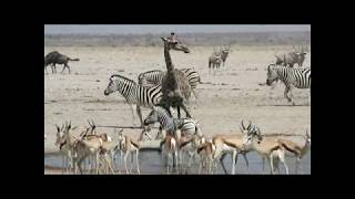 Duma Safaris - Wildlife Watching at a Waterhole in Namibia