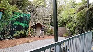 Green parrot landing on stick [SLOW MOTION]