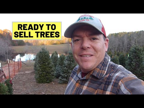 #89 Picking Up Christmas Trees & Setting Up Tree Lot