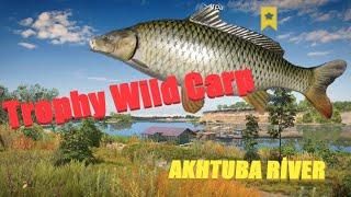 Trophy Wild Carp - Akhtuba River - Russian Fishing 4