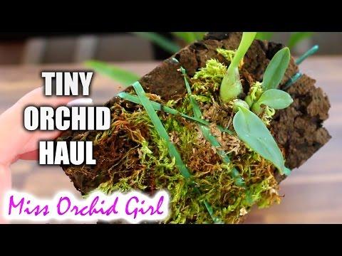 Tiny ebay Orchid haul - My first stinky bulbophyllum!