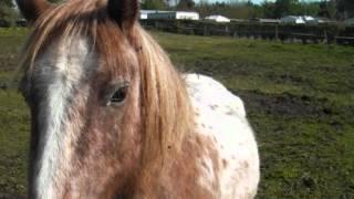 Photo des chevaux ~ Ile d'Oléron