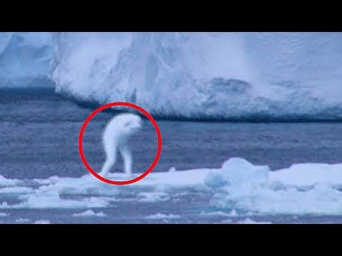 5 Mysterious Creatures