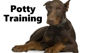 How To Potty Train A Doberman Pinscher Puppy - House Training Doberman Pinscher Puppies