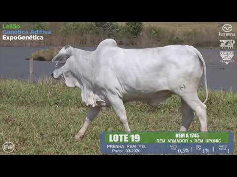 LOTE 19 - Leilão Genética Aditiva ExpoGenética 2019