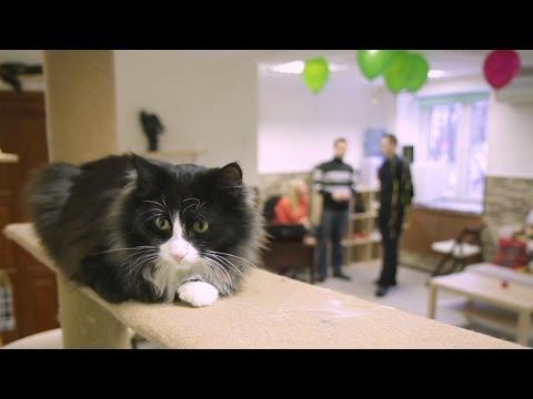 В челябинском кафе предлагают играть с кошками(новости)