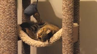 Домики для кошек с когтеточкой