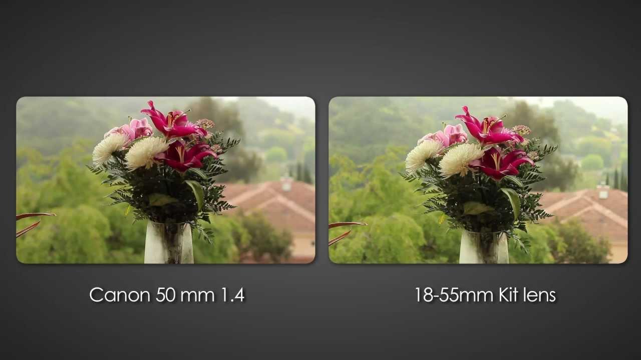 Canon 55mm 1.4 vs 18-55mm kit lens - Shallow depth of field DSLR ...