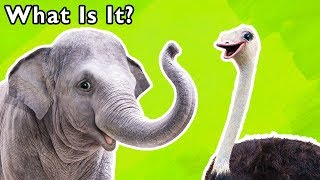 What Is It? and More | ANIMAL SONGS | Baby Songs from Mother Goose Club!