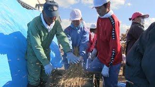 10月27日、八幡平市西根歴史民族資料館の前で寺田小学校の子ども達が昔...