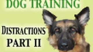 Dog Training Tutorial - Distractions PART II (Healing Reactivity)