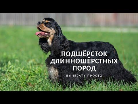 Как вычесать подшёрсток у длинношёрстной собаки?