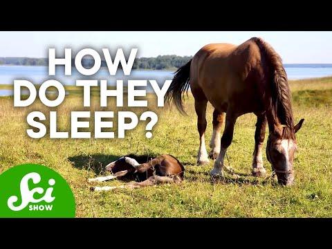 8 Strange Animal Sleeping Habits