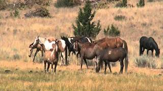 Mustang Horses on Oregon's Wild Side ~August 2011~