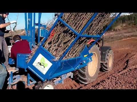 Plantação de pomar de Pêra Rocha para a empresa Masilfrutas www.agriplanta.com