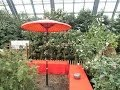*色鮮やかな花*2014年3月:百合が原公園緑の温室