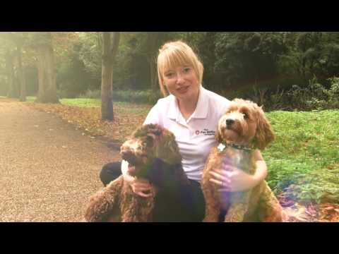 How to start your own pet sitting dog walking business