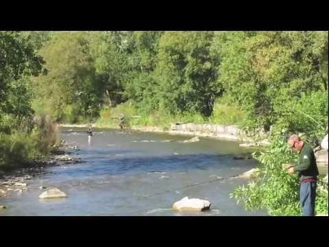 Salmon Fishing Erindale Park Credit River  Mississauga Ontario