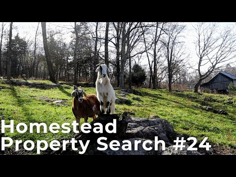Homestead Property Search in Eastern Tennessee | Property Search Vlog #24