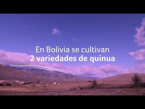 ¿Cuáles Son Las Variedades De Quinua En Bolivia?   | Quinua Real Bolivia