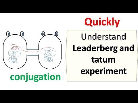 Lederberg and Tatum experiment