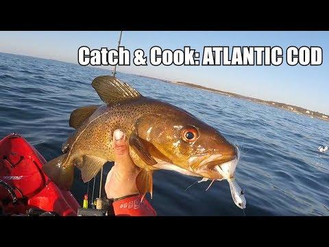 Catch & Cook 38: ATLANTIC COD!!!