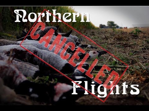 Michigan Goose Hunting with Northern Flights Cancelled