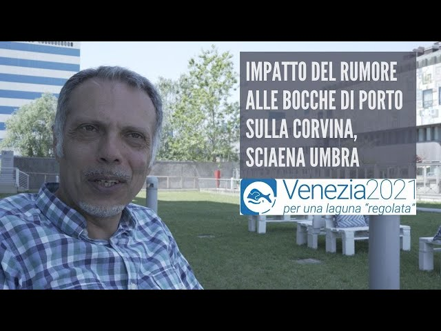 Impatto del rumore alle bocche di porto sulla corvina, Sciaena umbra - Venezia2021