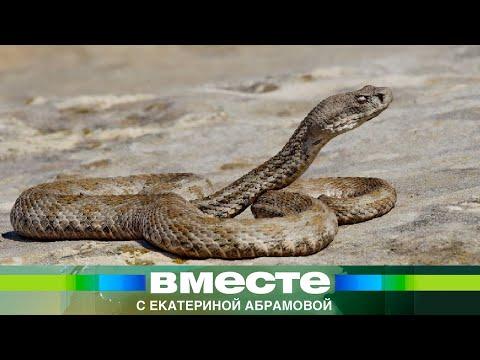 Нашествие змей в Армении. Эфир 3.06.2012