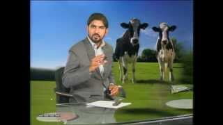 khudkafeel  Pakistan Dairy Farming Part 1